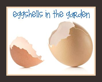 Eggshells in the Garden  Sprinkle crushed eggshells around your vegetable plants to keep cutworms, slugs and snails away. (The crushed shells either cut them or just cause too much discomfort for them to crawl across and they almost always retreat.) Plus other uses listed.