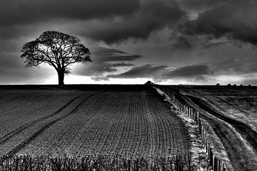 Black white photography techniques