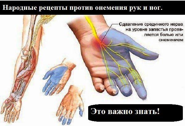 Онемение рук - симптомы, которые могут сопровождать различные заболевания.Поэтому очень важно сделать обследование и выявить причину онемения рук. Артрит, артроз, остеохондроз..... Причин может быть множество. Онемение рук сопровождают боли, которые порой невыносимы. Народная медицина советует облегчить недуг с помощью простых и доступных средств. Фитотерапевты утверждают, что растение донник лекарственный помогает устранить онемение рук. Щепотку высушенной травы заварить в 1 стакане кипятка…