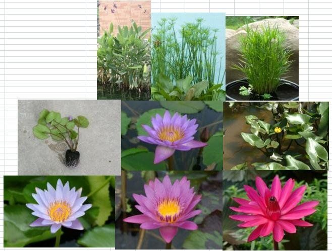 Found on alibaba comAquatic Plants With Names