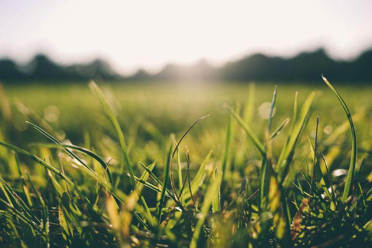akým spôsobom zavlažujete trávnik vy?  https://www.pvmsystem.sk/ako-vybrat-vhodny-sposob-pre-zavlazovanie-travnika-