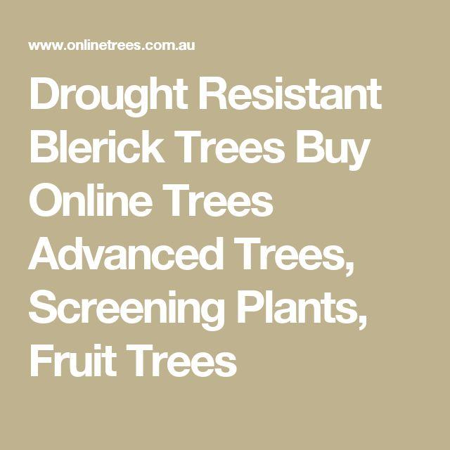 Drought Resistant Blerick Trees Buy Online Trees Advanced Trees, Screening Plants, Fruit Trees
