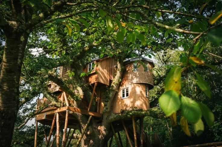 Luxury Tree House Accommodation - Fox & Hounds Country Hotel - Devon