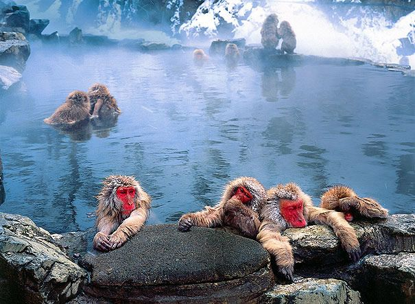 Jigokudani hotspring in Nagano, Japan, to see Japanese Macaques (Snow Monkeys) warm up in the natural spa in the winter months