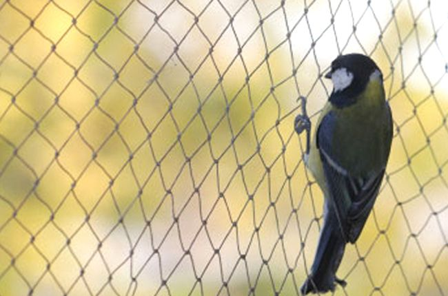 Co polymer Nylon #Bird #Nets to protect your home and #garden from unwanted species.