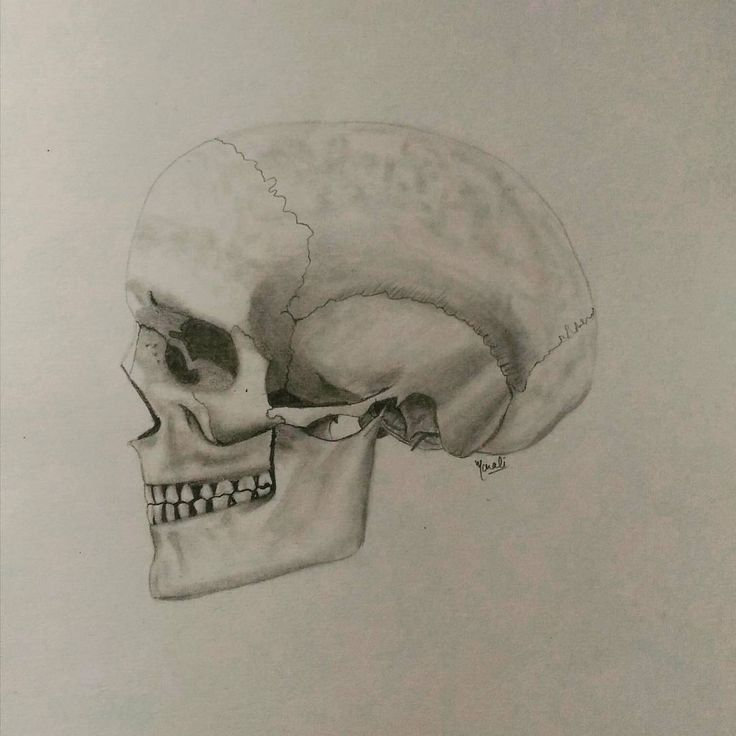 """54 Likes, 7 Comments - Dedicated to Art 🇮🇳 (@creativitytrance) on Instagram: """"""""The skull is nature's sculptures"""" For practicing rendering I tried doing skull & loved the way it…"""""""
