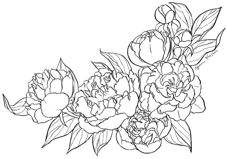 peony lineart by cyen d3aixcf Peony coloring page