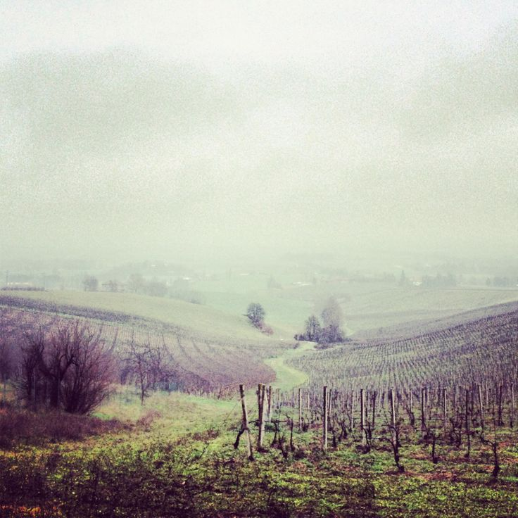 Our #vineyards in these foggy days #umbertocesari #winter