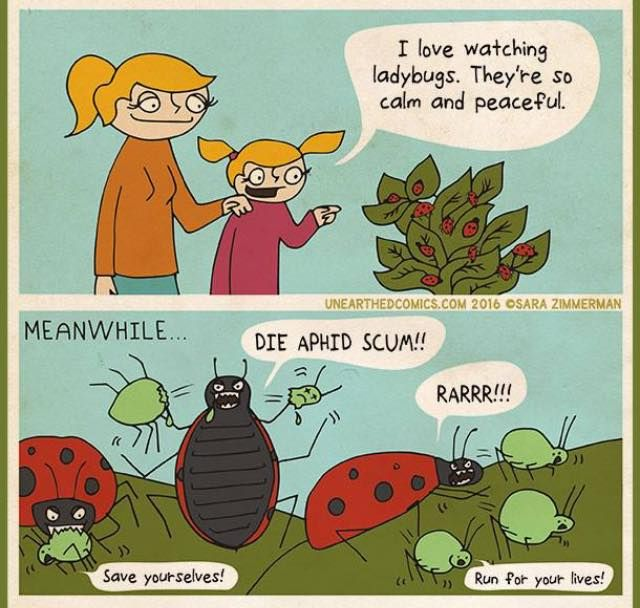 367 Best Companion Planting And Pollinators...... Images