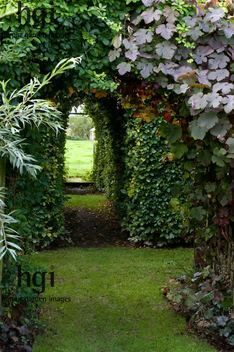 Secret garden arches..so beautiful and mysterious underneath, then a wide-open outdoor room.
