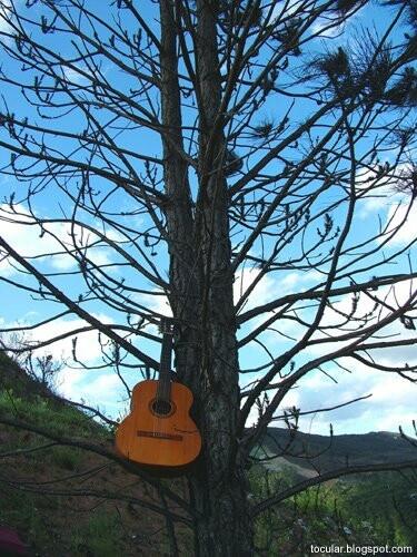 Árvore dos ventos