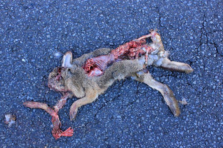 carcass hare - Hledat Googlem