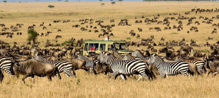 #SafariInKenya will definitely bring you close to some fantastic wildlife and we can find camps away from the crowded areas.