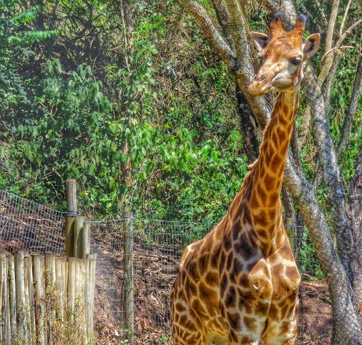 Zoopark Itatiba. #zoo #itatiba #a
