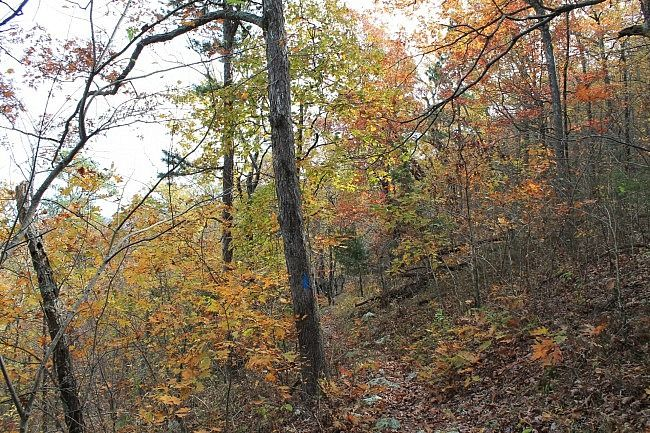 Fall foliage on the Ouachita Trail between FR 6014 and the Winding Stair Trailhead.