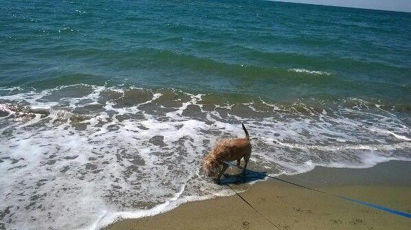 Pedro al mare