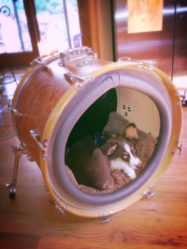 Up Cycled Bass Drum Dog Bed. BOOM!