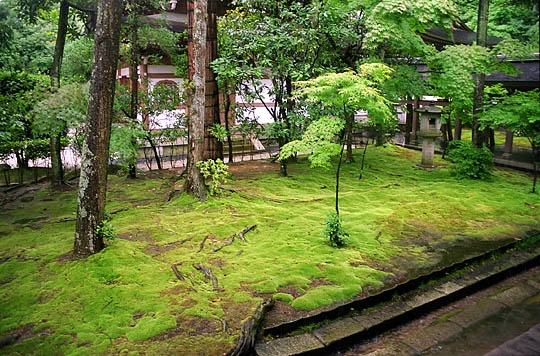 The moss garden of the Ryoan-ji Temple, Kyoto, Japan.