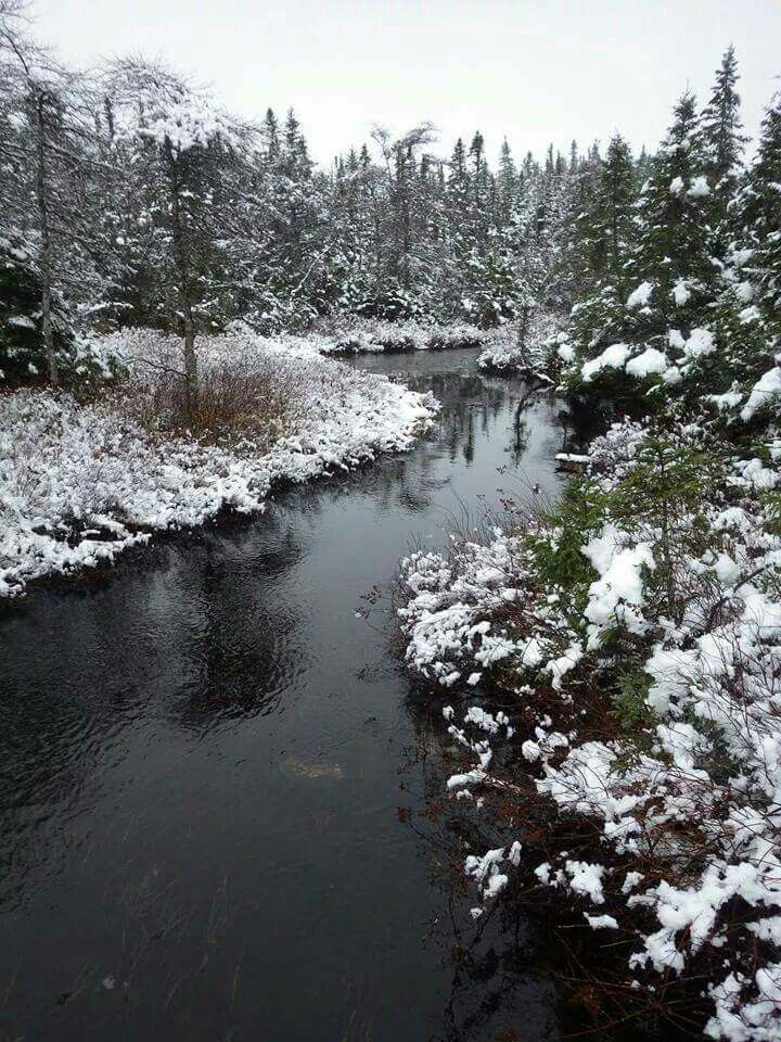 Winter in the Woods of Newfoundland