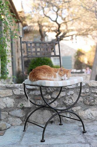 Provençal cat: Photo by Veronika Belotserkovskaya / www.traveling-cats.com