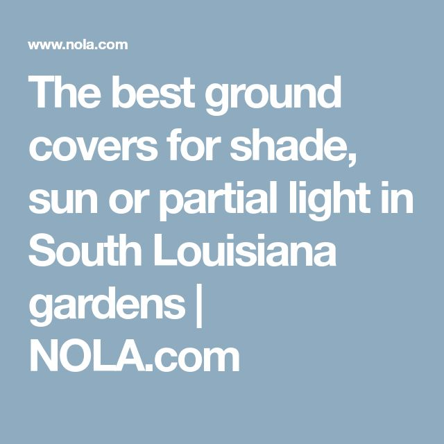 The best ground covers for shade, sun or partial light in South Louisiana gardens | NOLA.com