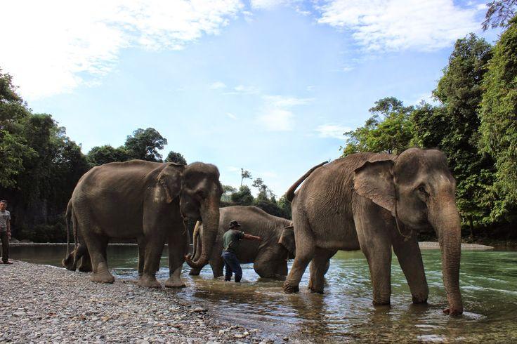 NORTH SUMATERA TOUR GUIDE: Tangkahan Eco Tourism
