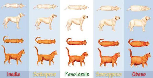 In italia circa il 30% dei nostri cani e gatti soffre di una patologia sottostimata e sottovalutata: L'OBESITA'. Perder peso è impegnativo per tutti, bipedi o quadrupedi...Presso la nostra Clinica la Dott.ssa Caretti vi potrà consigliare e, nel caso fosse necessario, potrà impostare un programma per far dimagrire il vostro animale. http://www.clinicaveterinariacmv.it/dove_siamo_contatti.php