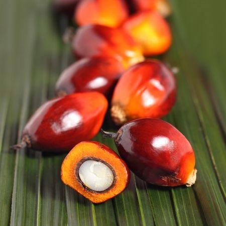 les 25 meilleures idées de la catégorie fruit du palmier sur