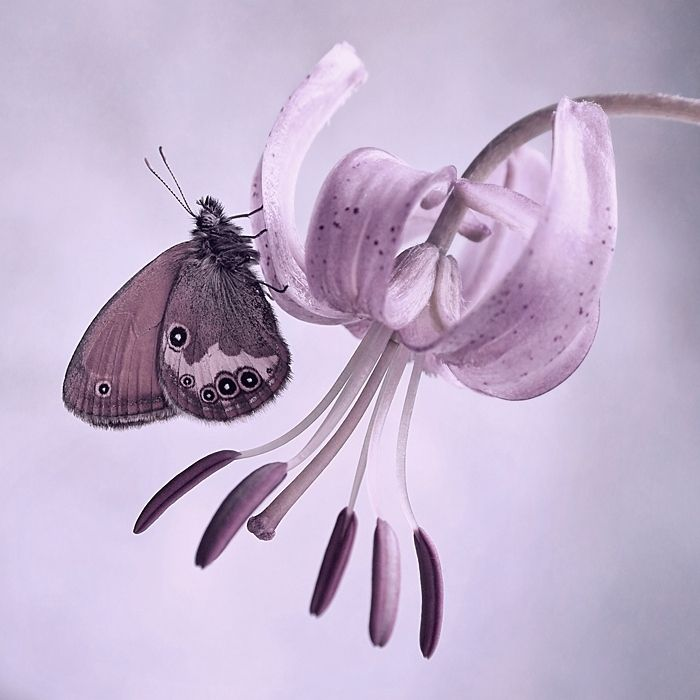 pin by fusta08 on farfalle pinterest blume lila und schmetterlinge. Black Bedroom Furniture Sets. Home Design Ideas