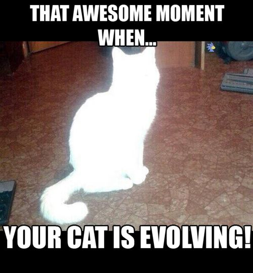 what? meowth is evolving .....congratulations, your meowth has evolved to a persian.