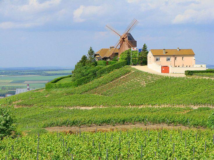 Champagne vineyards in Verzenay in the Montagne de Reims subregion