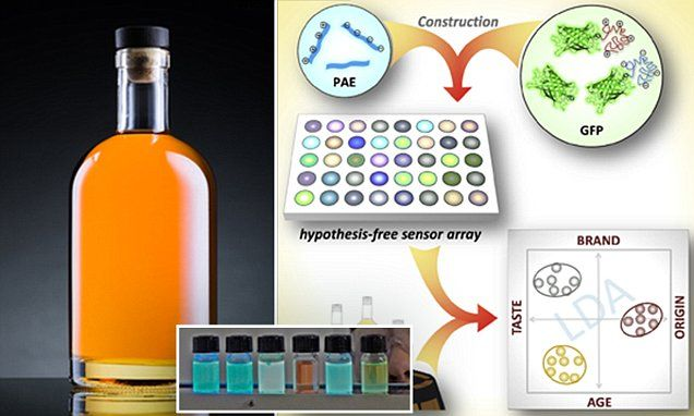 "#DailyMailUK .... ""Researchers at Heidelberg University in Germany have created an array of glowing dyes that react with different trace flavours and chemicals in whisky to produce a unique fluorescent signature."".... http://www.dailymail.co.uk/sciencetech/article-4583848/Artificial-tongue-knows-drinking-cheap-whisky.html"