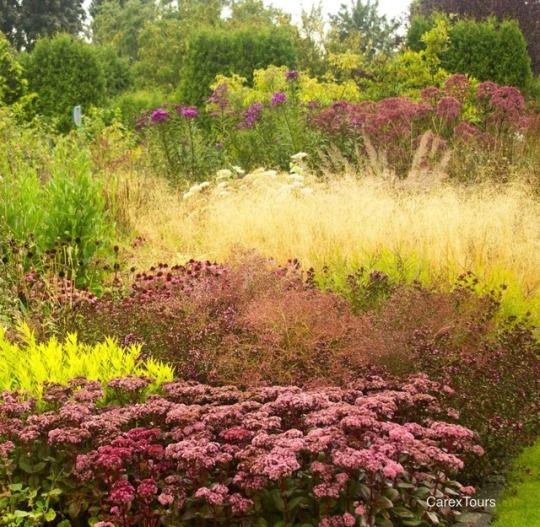 carex garden design by carolyn mullet piet oudolf carextours travel vlinderhof