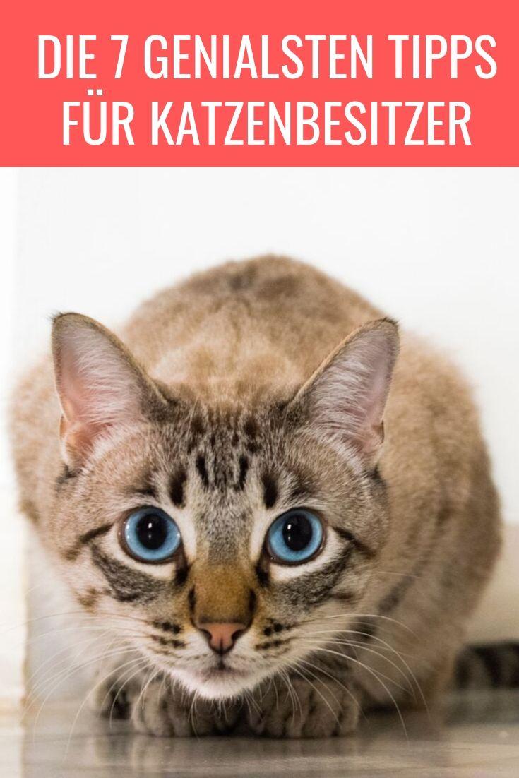 Die 7 Genialsten Tipps Fur Katzenbesitzer Gatos Zodiaco