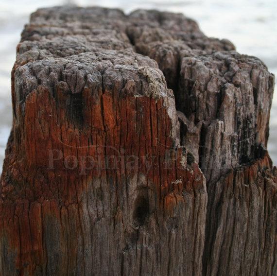 Wooden groyne at shell beach by PopinjayPrints on Etsy, $17.00