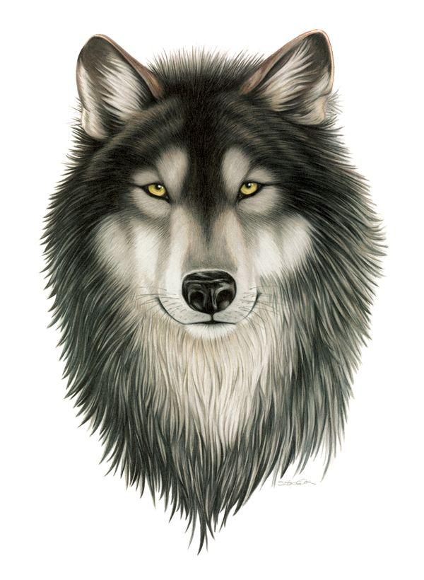 Wildlife Illustration by Stefanie Clark, via Behance