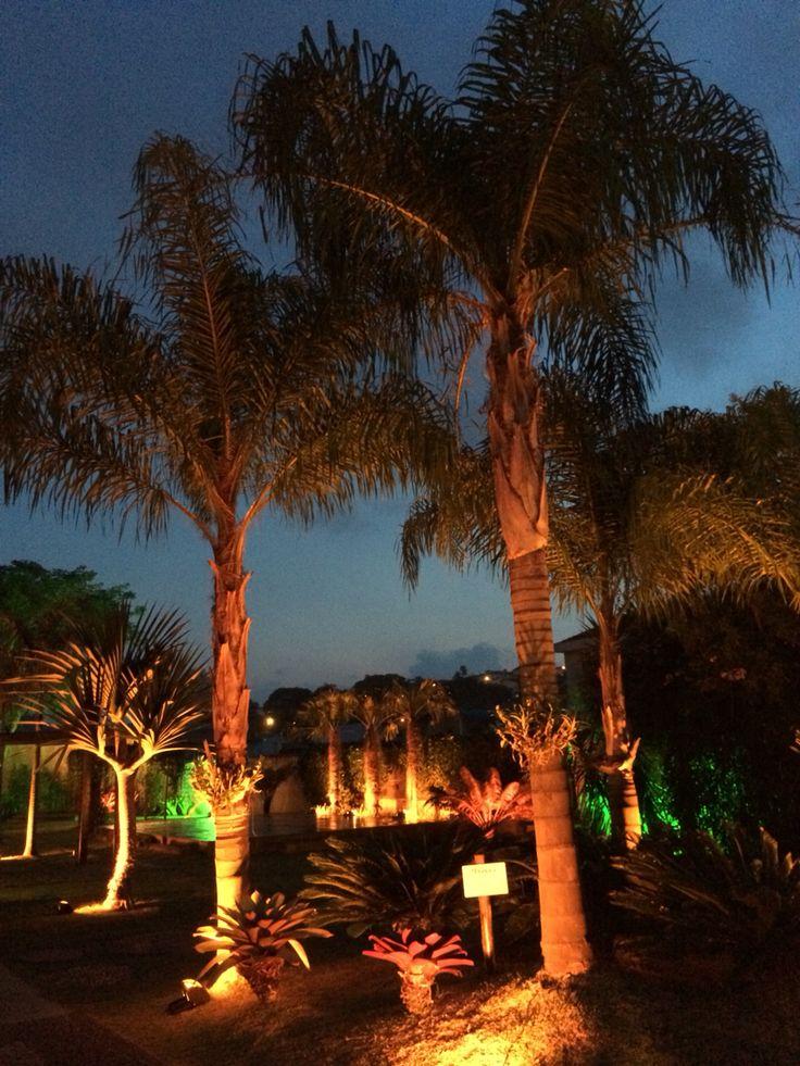 Tropical Garden iluminação e palmeiras exóticas decoram esse espaço lindo #videiragarden #wagnerdentello #iluminacao #luxo #beleza #paisagismo