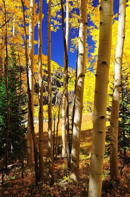 1000 Images About Colorado Art On Pinterest Rocky Mountains Aspen Colorad