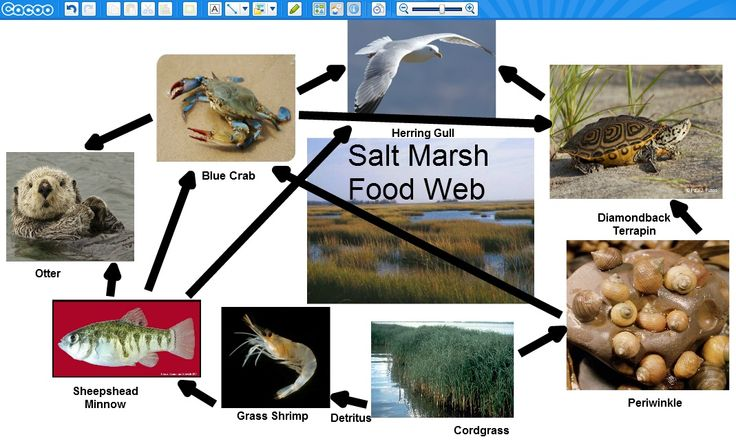 Web 2.0 Collaborative Projects in the Middle School