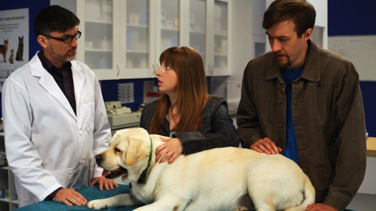 Keely and Trevor tend to their other dog, Kai, as the vet delivers some heart-breaking news (re-enactment).