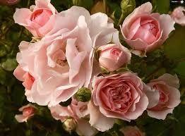 Znalezione obrazy dla zapytania kwiaty bukiety