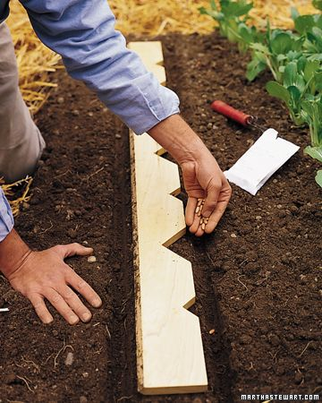 Planter's Yardstick  You'll quickly come to rely on this simple tool. It's made from a four-inch-wide, four-foot-long board: Leave one of the long edges flat, or create a beveled edge by shaving it at a 45-degree angle with a table saw; you can also have a lumberyard cut it for you. Along the other long edge, cut alternating deep and shallow notches at 6-inch intervals.