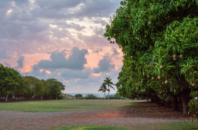 Two months into Autumn and we're already longing for summer sunsets. This one, in a far North Queensland mango orchard was captured by @PathsLessTravelled for #BBprovenanceproject  The Beerenberg Provenance Project is a project in celebration of rural farmers and their produce, across Australia. We believe in supporting Australian farmers.