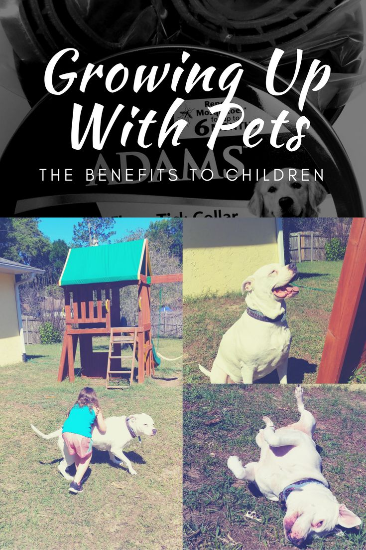 (Ad) Learn the benefits of growing up with pets and how to protect those pets from harmful pests. Be Adams Proud and protect your pet from fleas, ticks and mosquitoes this summer! AdamsPetCare