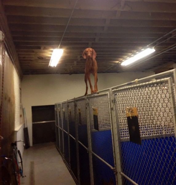 Όταν τα σκυλάκια κάνουν εντελώς λάθος επιλογές