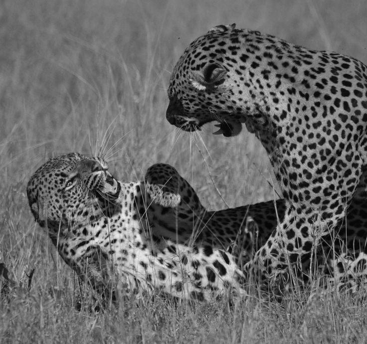 Picture taken by John Holley on that first game drive.