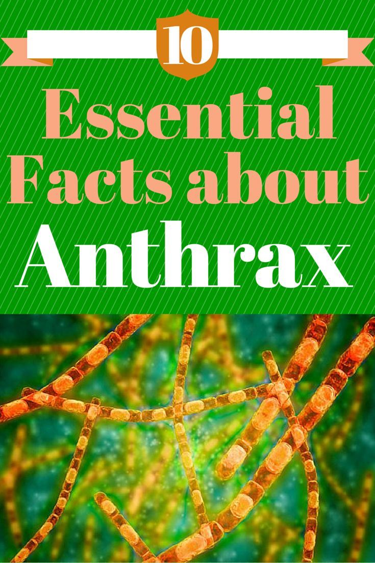 10 Essential Facts About Anthrax - You are more likely to come into contact with potentially deadly anthrax bacteria in a research lab than in your natural environment #anthrax #essentialfacts #bacteria | everydayhealth.com
