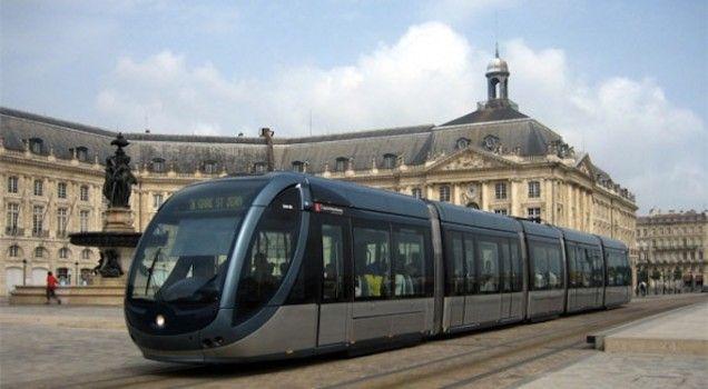 Un lama dans le tramway à Bordeaux !