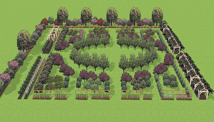 Author's rendering of the Fruit Garden. I like this shape. Could change fruits and other plants. Add in plants that deter pests, nut trees, bee keep, black berries, blue berries, strawberries etc. But I LOVE the general shape.