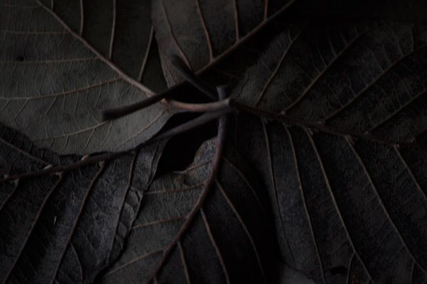 dark-leaves.jpg Anna Berger